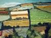 Fields of Galicia